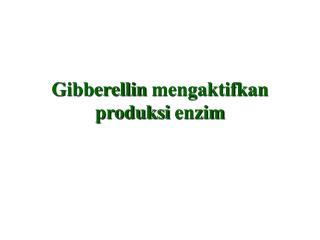 Gibberellin mengaktifkan produksi enzim