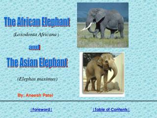 Water for elephant essays