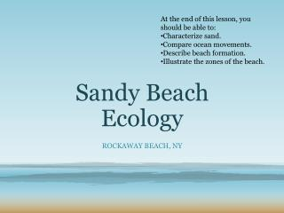 Sandy Beach Ecology