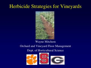 Herbicide Strategies for Vineyards