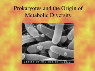 Prokaryotes and the Origin of Metabolic Diversity