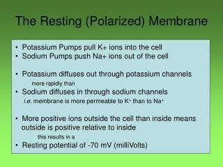 The Resting (Polarized) Membrane