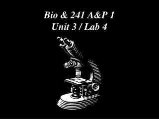 Bio & 241 A&P 1  Unit 3 / Lab 4