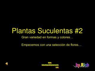 Plantas Suculentas #2