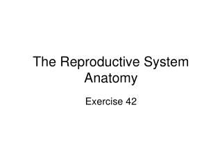 The Reproductive System Anatomy
