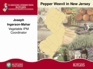 Pepper Weevil in New Jersey