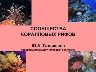 СООБЩЕСТВА  КОРАЛЛОВЫХ РИФОВ Ю.А. Галышева презентация к курсу «Морская экология»