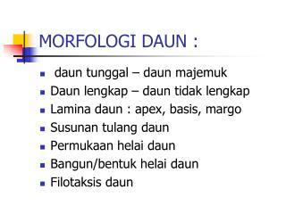 MORFOLOGI DAUN :