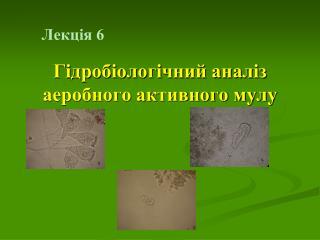 Лекція 6