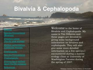 Bivalvia & Cephalopoda