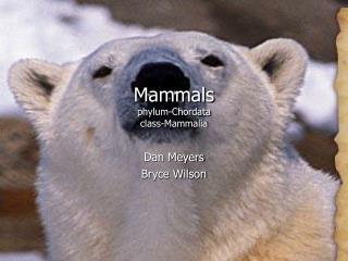 Mammals phylum-Chordata class-Mammalia