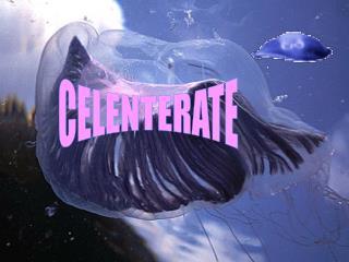CELENTERATE