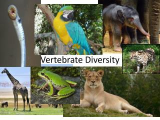 Vertebrate Diversity