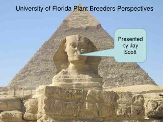 University of Florida Plant Breeders Perspectives