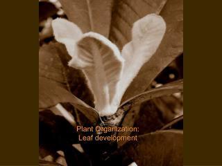 Plant Organization: Leaf development