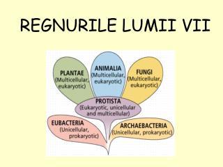 REGNURILE LUMII VII
