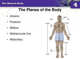 The Planes of the Body