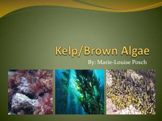 Kelp/Brown Algae