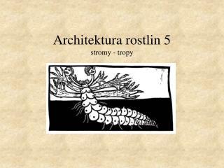 Architektura rostlin 5 stromy - tropy