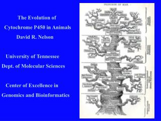The Evolution of        Cytochrome P450 in Animals            David R. Nelson