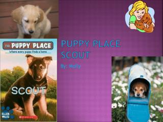 Puppy Place Scout