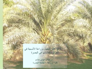 Activities of Date Palm Tissue Culture in Basrah