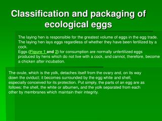 The laying hen is responsible for the greatest volume of eggs in the egg trade.