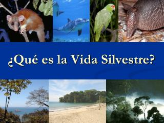 ¿Qué es la Vida Silvestre?
