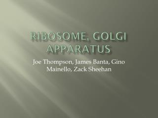 Ribosome, Golgi apparatus