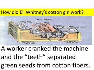 How did Eli Whitney's cotton gin work?