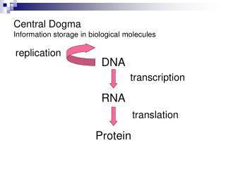 Central Dogma Information storage in biological molecules