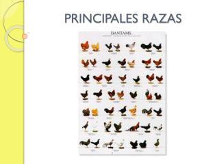 PRINCIPALES RAZAS
