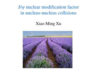 J/ ? nuclear modification factor  in nucleus-nucleus collisions