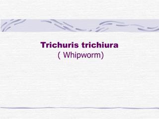 Trichuris trichiura   Whipworm