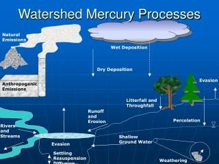 Watershed Mercury Processes