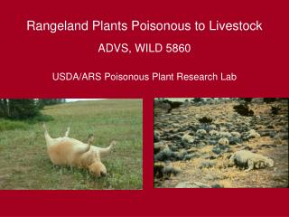 Rangeland Plants Poisonous to Livestock