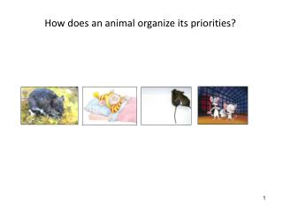 How does an animal organize its priorities