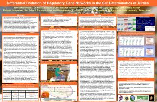 Differential Evolution of Regulatory Gene Networks in the Sex Determination of Turtles