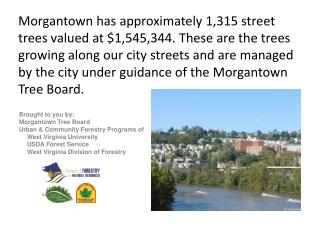 Brought to you by:  Morgantown Tree Board Urban & Community Forestry Programs of