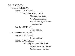Order RODENTIA Suborder SCIURIDA Family SCIURIDAE Subfamily SCIURINAE Miospermophilus  sp.