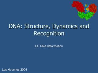 DNA: Structure, Dynamics and Recognition