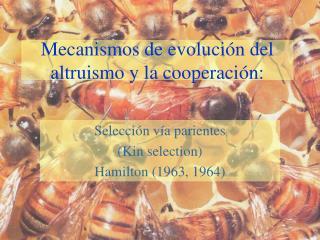 Mecanismos de evolución del altruismo y la cooperación: