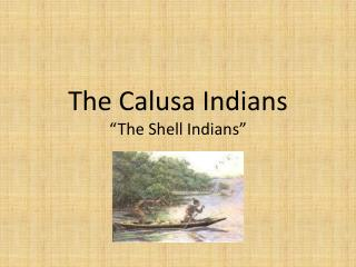 The Calusa Indians �The Shell Indians�
