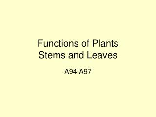 Functions of Plants Stems and Leaves