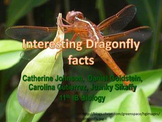 Catherine Johnson,  Daniel Goldstein, Carolina Gutierrez, Juanky Sikaffy 11 th  IB Biology