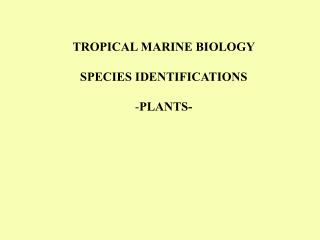 TROPICAL MARINE BIOLOGY SPECIES IDENTIFICATIONS PLANTS-