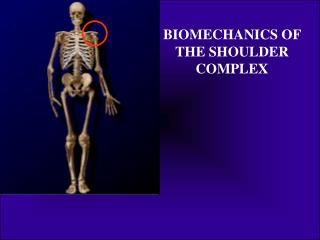 BIOMECHANICS OF THE SHOULDER COMPLEX