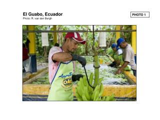 El Guabo, Ecuador Photo: R. van den Bergh