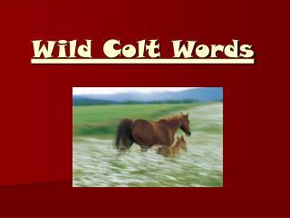 Wild Colt Words