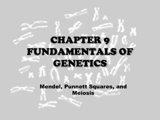 CHAPTER 9  FUNDAMENTALS OF GENETICS